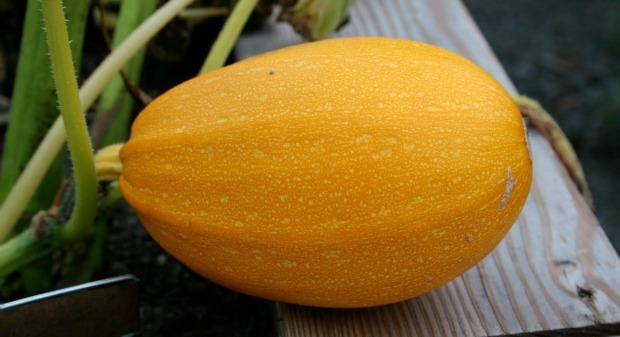 Orangetti tiene mejor aspecto y sabor que otra calabaza spaguetti.