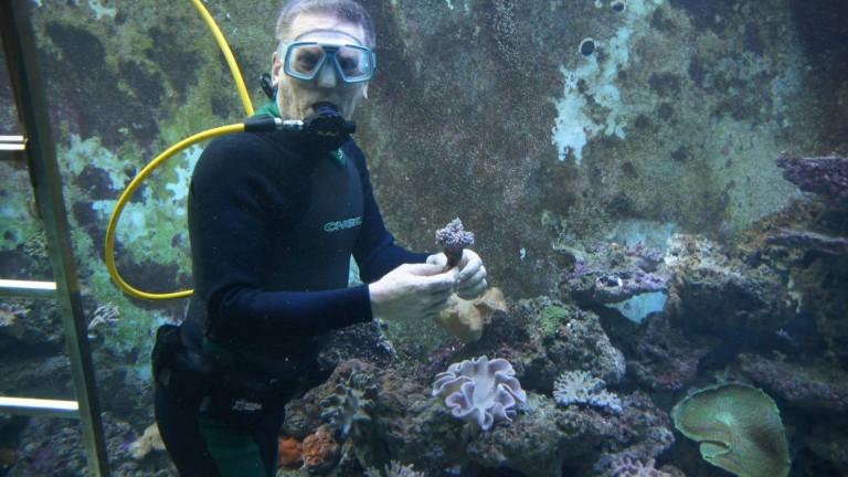 El acuario de Eli es tan grande que se puede bucear en él. Foto vía Facebook/ElisReefAquarium.